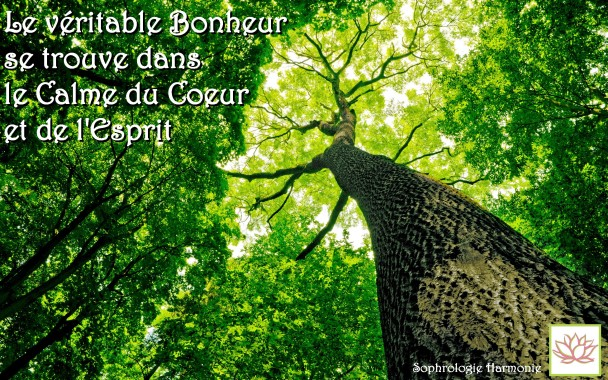 arbre-citation