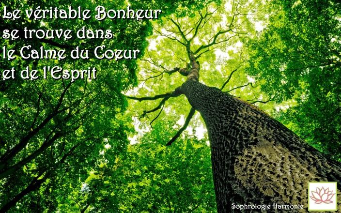arbre-citation