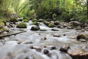 Life-of-Pix-free-stock-photos-river-forest-stream-nature-john-price